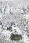 Arbres et chutes d'eau congelées — Photo de stock