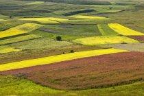 Linsen-Felder im Frühling — Stockfoto