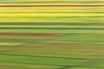 Campo verde lussureggiante parco nazionale dei Monti Sibillini, Italia — Foto stock