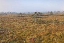 Заболоченных пейзаж с разреженными деревья — стоковое фото