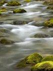 Primavera fredda e rocce coperte di muschio — Foto stock