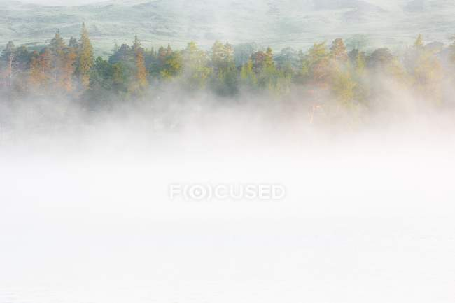 Morning mist covering trees in forest — Stock Photo