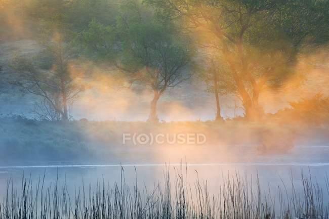 Niebla de la mañana cubriendo árboles en bosque - foto de stock