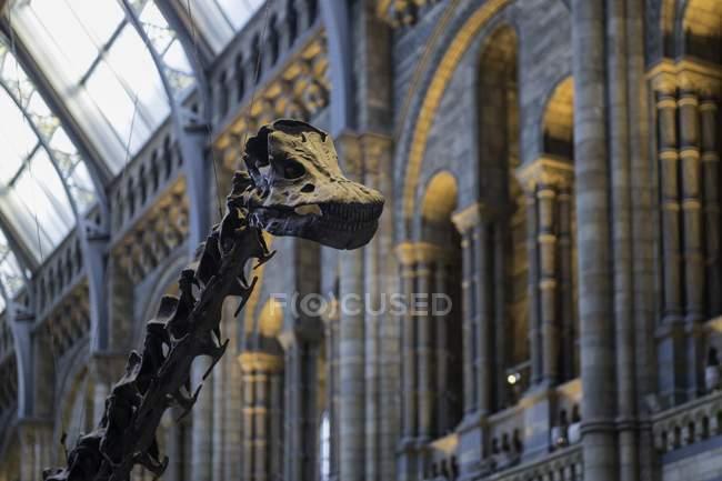 Squelette de diplodocus au Muséum d'histoire naturelle — Photo de stock