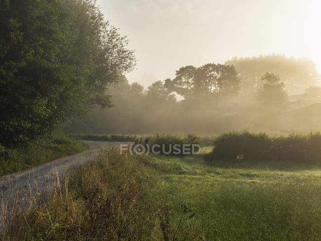 Lush forest with meadow — Stock Photo