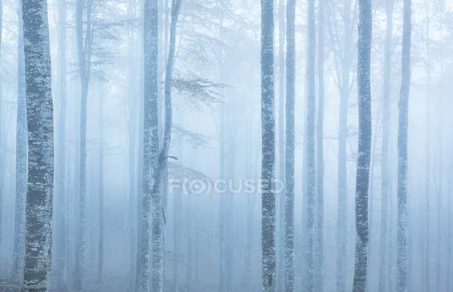 Cansiglio forest during foggy morning — Stock Photo