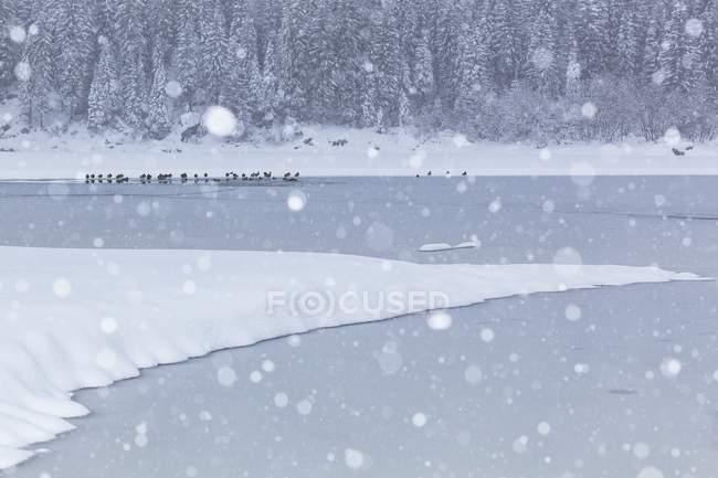 Lago Fusine no tempo de inverno — Fotografia de Stock