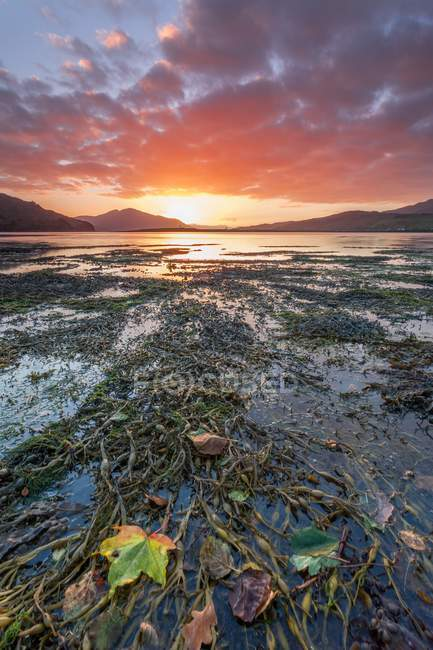 Picturesque bay with seaweeds — Stock Photo