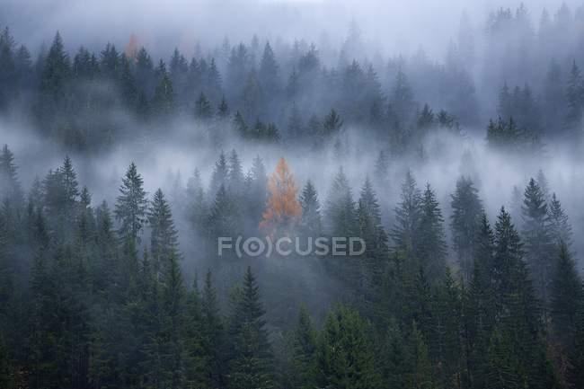 Niebla en otoño bosque en ladera de montaña - foto de stock