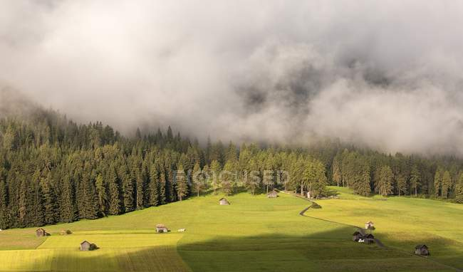 Fog over autumn forest on mountain slope — Stock Photo
