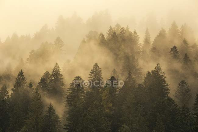 Fog over autumn forest on mountain slope — Stock Photo