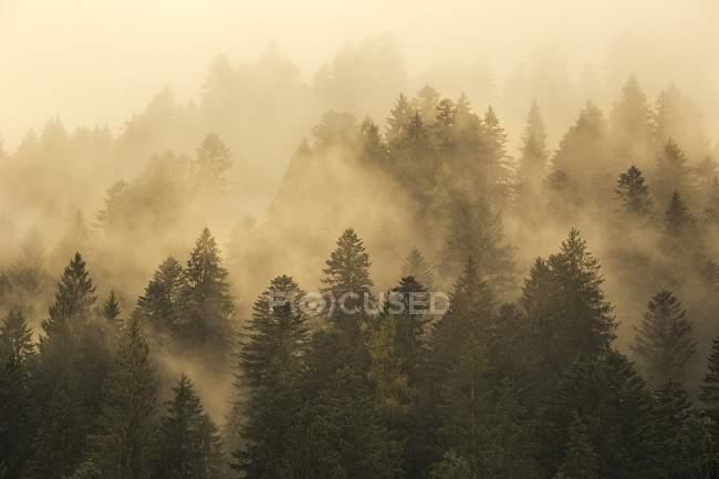 Туман над осенним лесом на склоне горы — стоковое фото