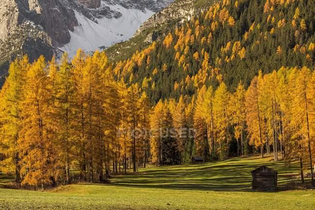 Árboles y montañas en el valle de Fiscalina - foto de stock