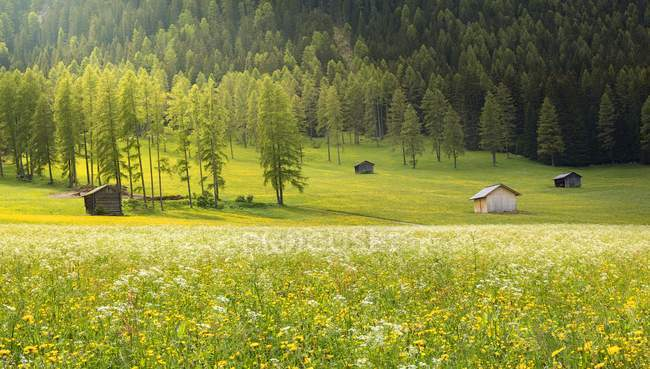 Долина с деревьями и домами — стоковое фото