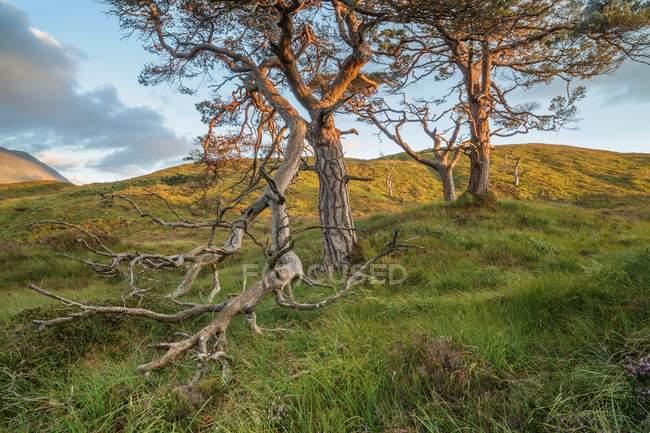 Arbres secs sur la colline — Photo de stock