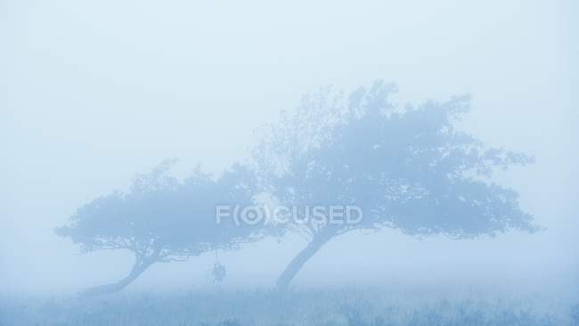 Tilted trees on wind — Stock Photo