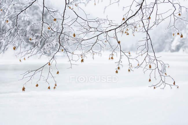 Paisaje invernal de los lagos de Plitvice - foto de stock