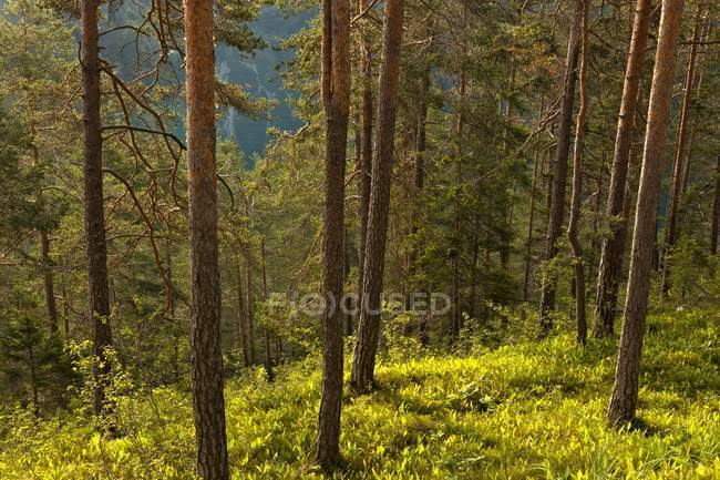 The forest at Tovel Lake — Stock Photo
