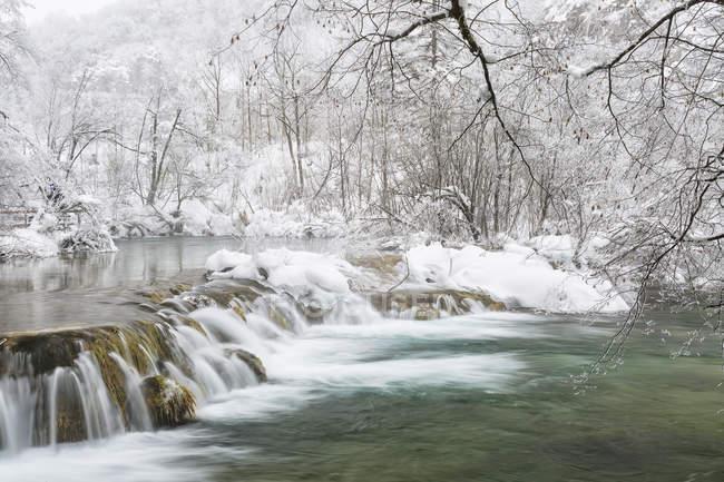 Заморожені краєвид з деревами snowy — стокове фото