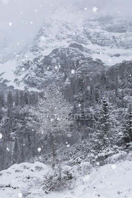 Dolomites mountains during winter — Stock Photo