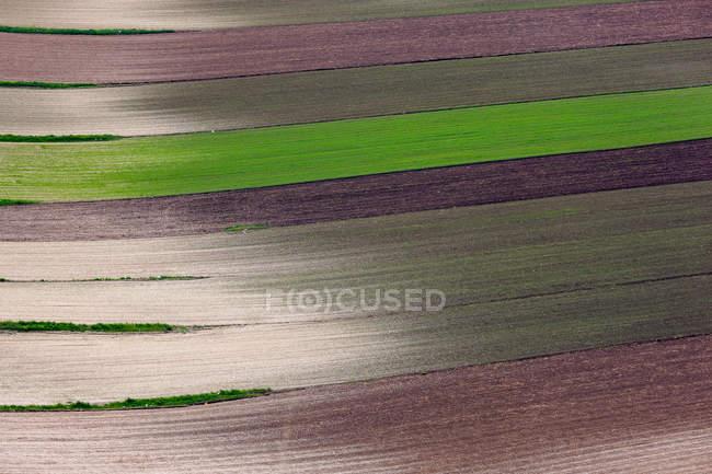 Видом на пышные поля различных культур — стоковое фото