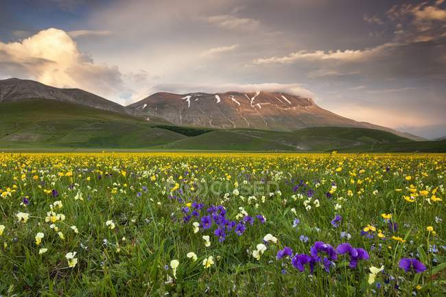 Spring blooming in Piano Perduto Plateau — стоковое фото