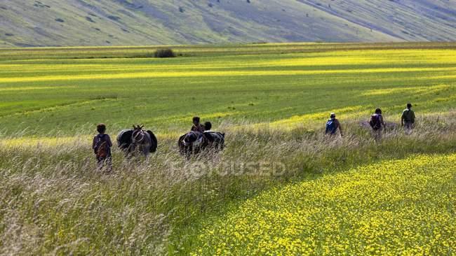 Turisti accompagnati da muli — Foto stock