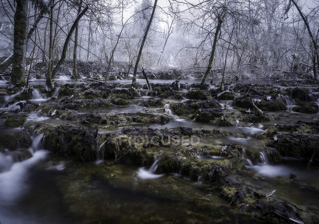 Forest springs flowing on rocky ground — Stock Photo