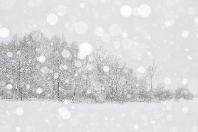 Fusine озеро под снегопад — стоковое фото