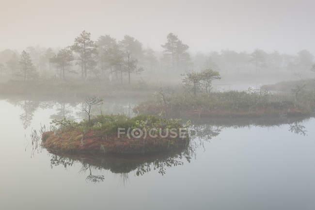 Tourbière Foggy Mnnikjrve — Photo de stock