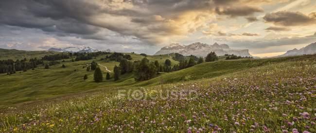 Prado florido en Pralongia - foto de stock