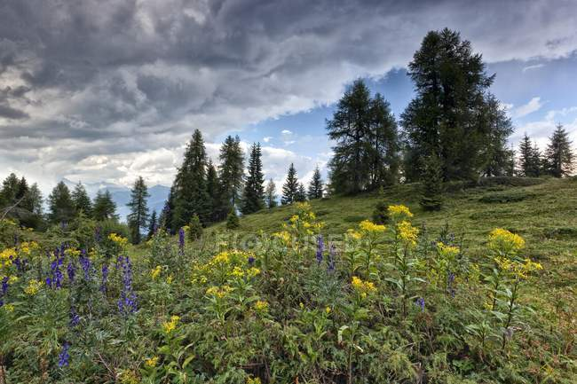 Lpine meadow near Peller hut — Stock Photo