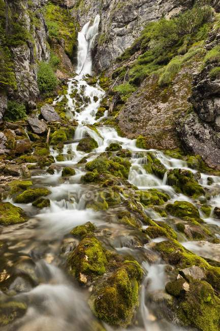 Cold spring and mossy rocks — Stock Photo