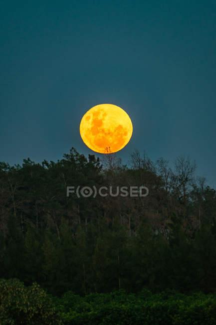 Великий місяць над ліс — стокове фото
