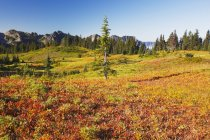 Beautiful Autumn Colors — Stock Photo