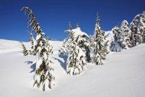 Свіжого снігу взимку — стокове фото