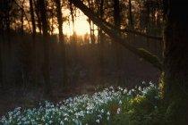 Nieve en el suelo del bosque al atardecer - foto de stock