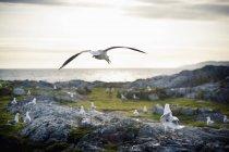 Чайки, сидя на скале — стоковое фото