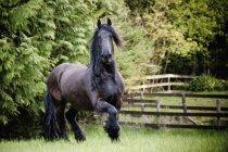 Кінь скачущих у сфері — стокове фото
