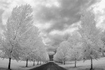Landstraße mit Bäumen — Stockfoto
