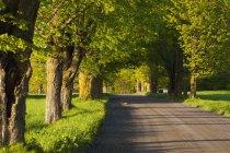 Деревенская дорога летом — стоковое фото
