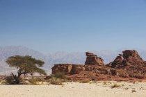 Akazienbaum und trockene Landschaft — Stockfoto