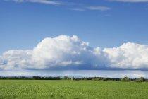 Volutes de nuages avec un ciel bleu — Photo de stock