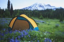 Zelten auf der grünen Wiese — Stockfoto