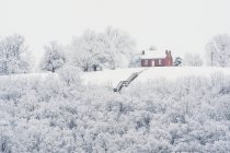 Winterbäume mit Schnee — Stockfoto