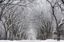 Снег покрыл улицу — стоковое фото