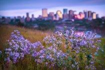 Польові квіти growng на полі — стокове фото
