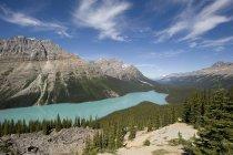 Горное озеро и деревья — стоковое фото