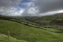 Grüne ländliche Landschaft — Stockfoto