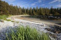 Küste mit Wald am Ufer — Stockfoto